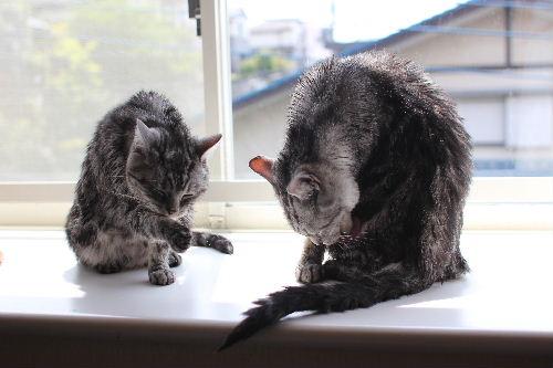 2011年4月シャワー2.JPG