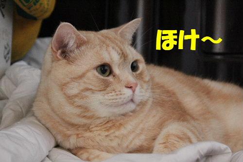 2011年4月ダウン4.JPG