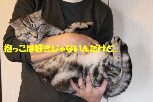 2011年4月抱っこ1.JPG