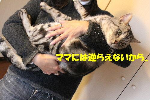 2011年4月抱っこ5.JPG