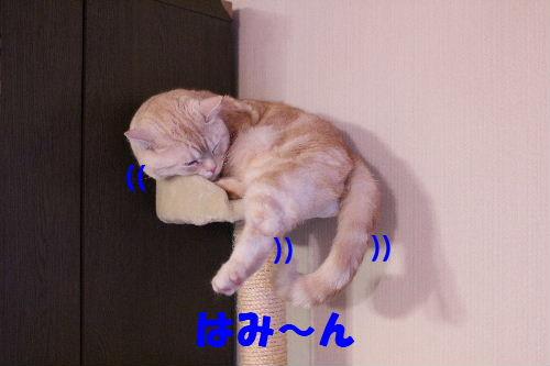 2011年4月新倒れ1.JPG