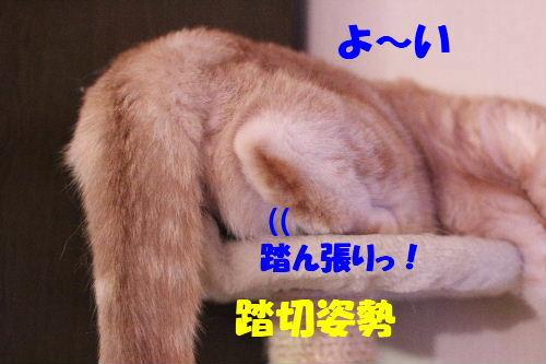 2011年4月新倒れ5.JPG
