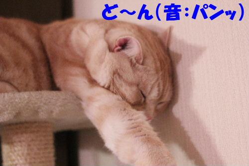 2011年4月新倒れ6.JPG