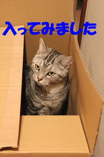 2011年4月段ニケ2.JPG