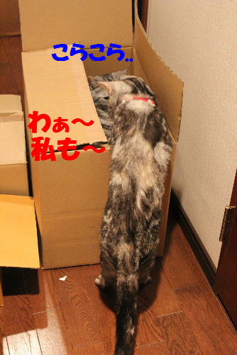 2011年4月段ニケ3.JPG