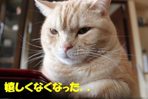 2011年4月狙い7.JPG