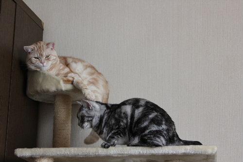 2011年4月猫又1.JPG