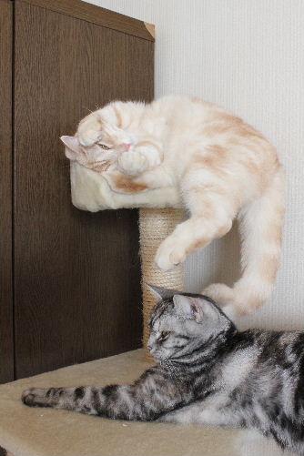 2011年4月猫又2.JPG