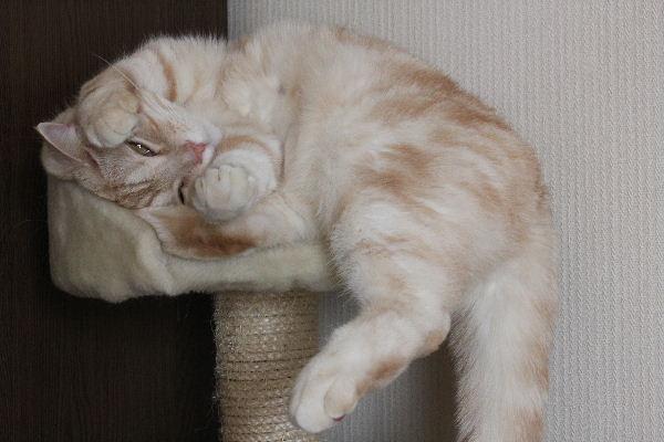2011年4月猫又3.JPG