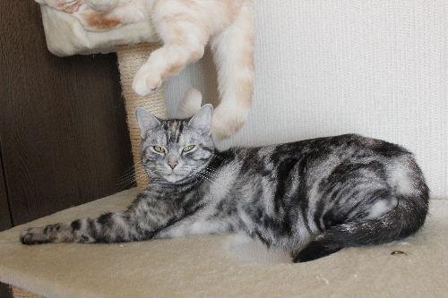 2011年4月猫又5.JPG