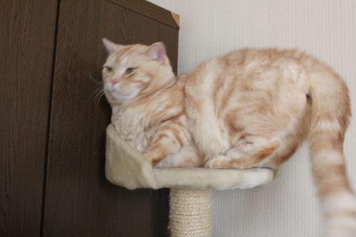 2011年4月猫又7.JPG