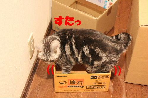 2011年4月箱ノエ9.JPG
