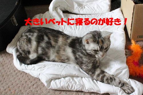 2011年5月うば5.JPG
