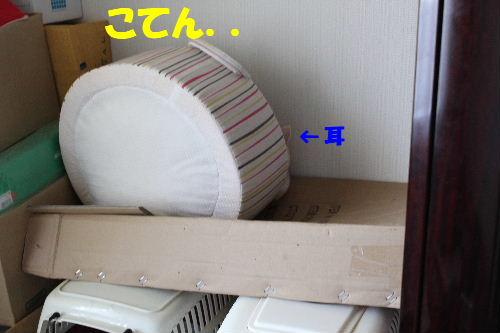 2011年5月ころ2.JPG