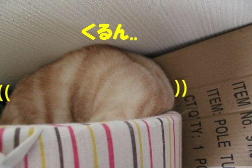 2011年5月ころ4.JPG