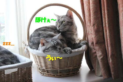 2011年5月一緒4.JPG