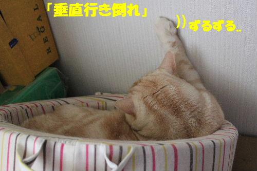 2011年5月万華鏡2.JPG