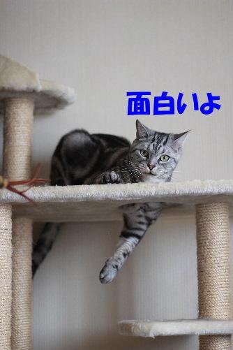2011年6月トレ4.JPG