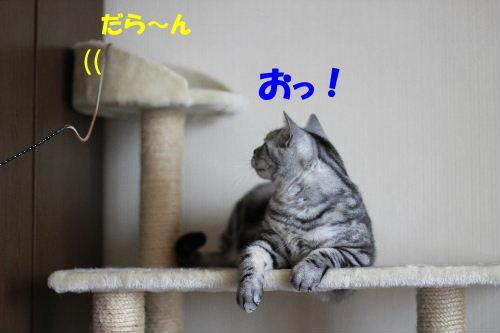 2011年6月トレ5.JPG