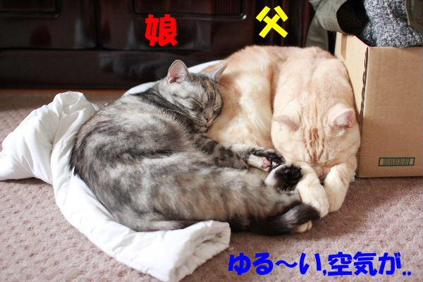 2011年6月ノビ1.JPG