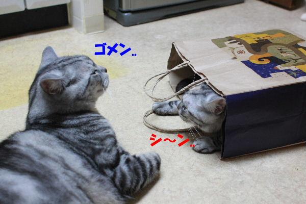 2011年6月ノビ7.JPG