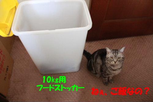 2011年6月フード1-2.JPG