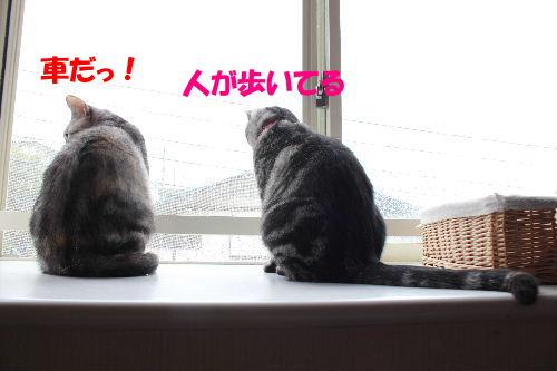 2011年6月レイン4.JPG