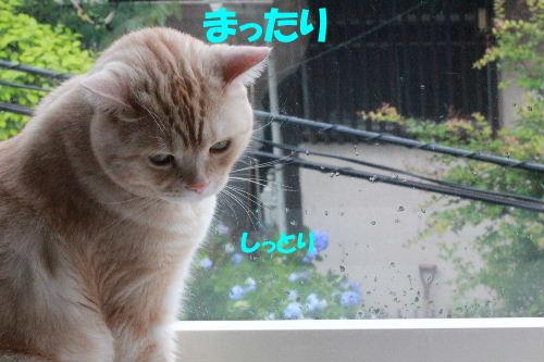 2011年6月レイン9.JPG