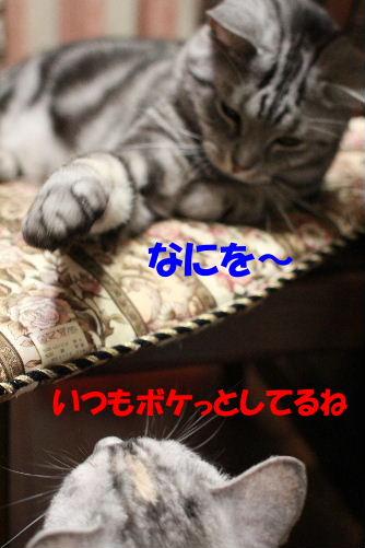 2011年6月噛み1-2.JPG