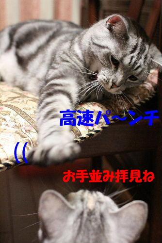 2011年6月噛み1-3.JPG