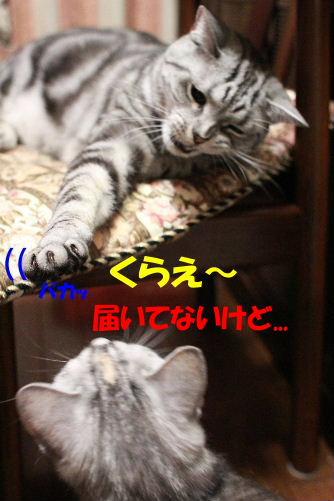 2011年6月噛み1-4.JPG