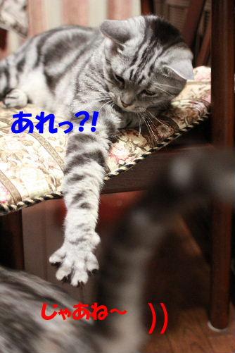 2011年6月噛み1-5.JPG