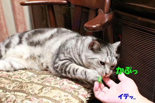 2011年6月噛み2-2.JPG