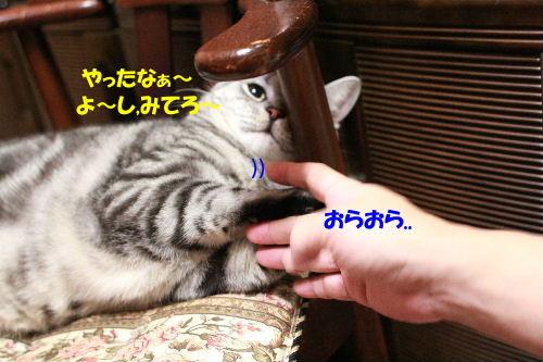 2011年6月噛み2-3.JPG