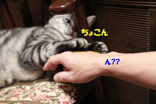 2011年6月噛み2-4.JPG