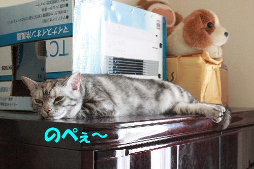 2011年6月夏3.JPG