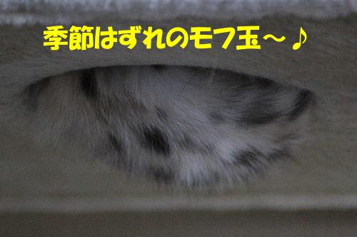 2011年6月季節7.JPG