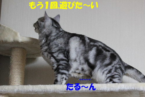 2011年6月季節8.JPG