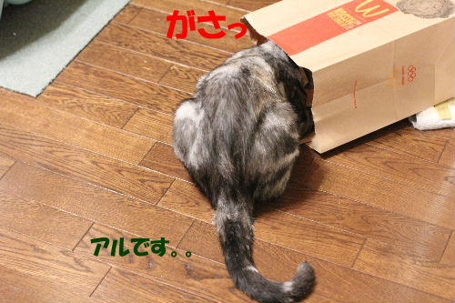 2011年6月肝1-2.JPG