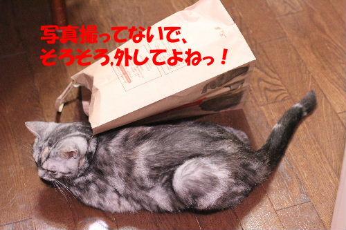 2011年6月肝7.JPG