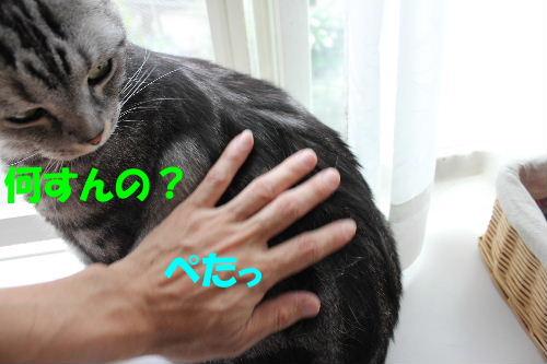 2011年6月触り1.JPG