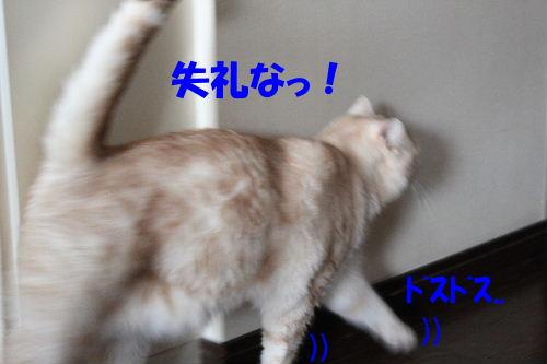 2011年6月触り2-6.JPG