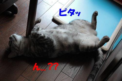 2011年7月アル4.JPG
