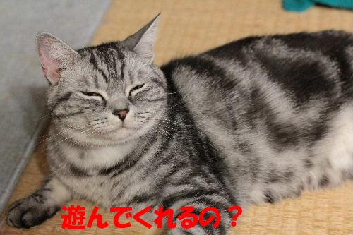 2011年7月ノエ0.JPG