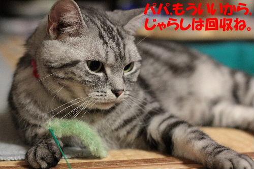 2011年7月ノエ8.JPG