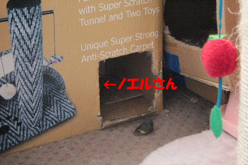 2011年7月ヤマト2.JPG