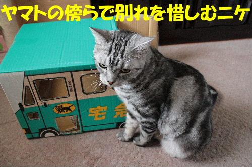 2011年7月ヤマト3-3.JPG
