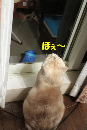 2011年7月窓9.JPG