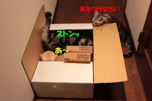 2011年7月箱3.JPG