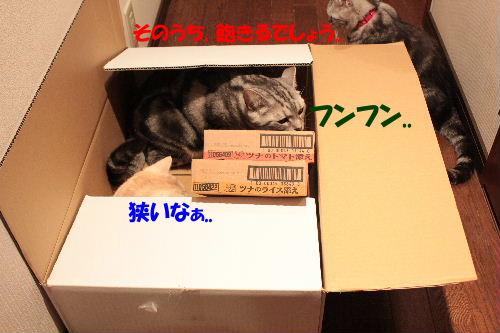 2011年7月箱4.JPG